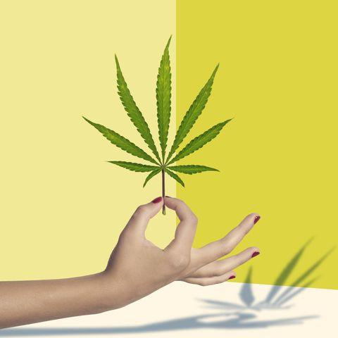 Leaf, Green, Plant, Hemp family, Herbal, Botany, Grass, Hemp, Hand, Weed,