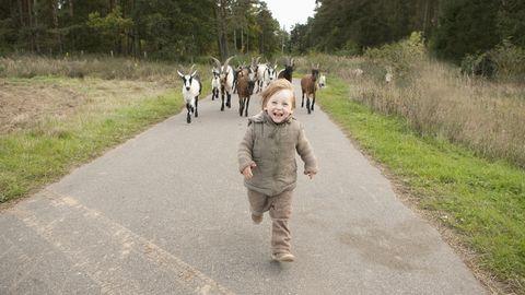 kindje wordt achterna gezeten door een stel geiten