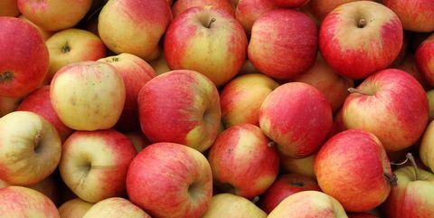 appel-100-miljoen-bacterien
