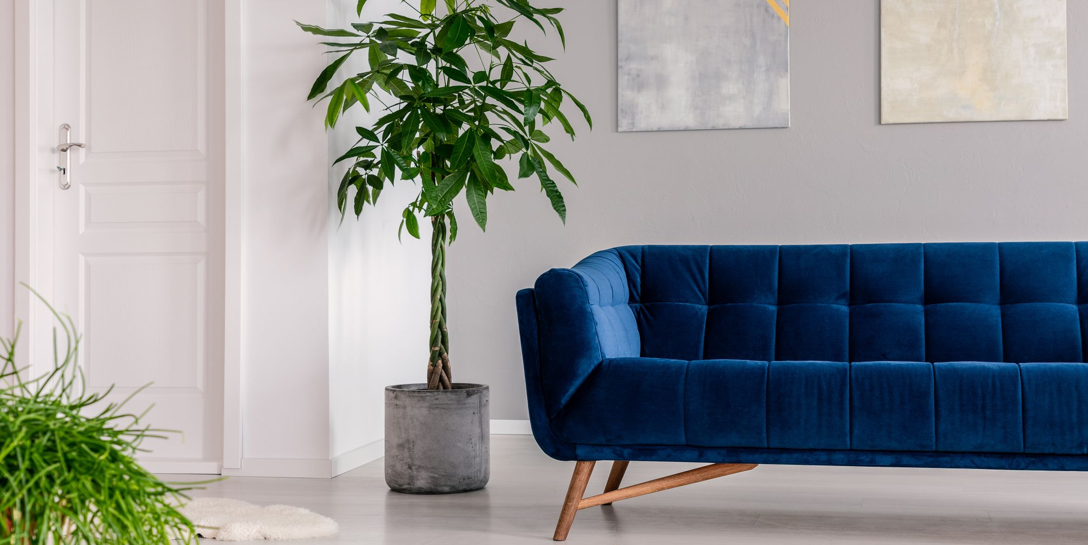 Waiting room interior in a luxurious clinic furnished with a velvet dark blue sofa, a rug and green plants. Real photo.