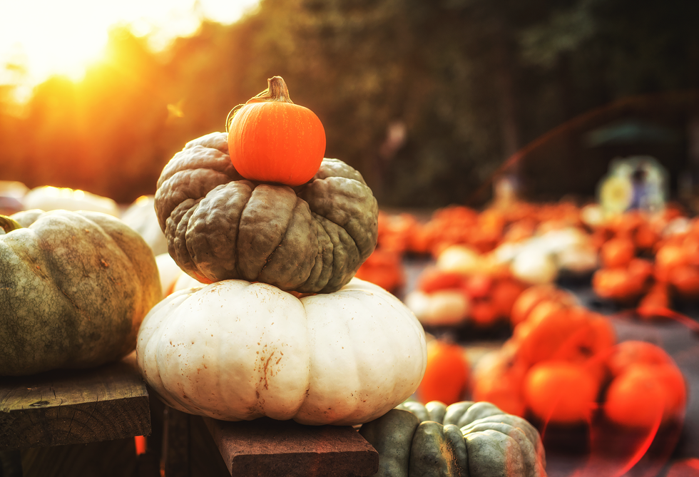 The Best Pumpkin Patch Near Me in Every State