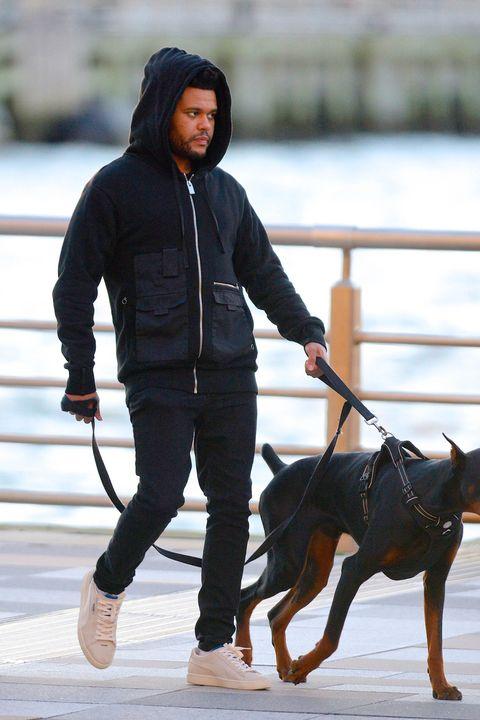Dog, Dog walking, Canidae, Dog breed, Leash, Rottweiler, Dobermann, Working dog, Toy manchester terrier, Companion dog,