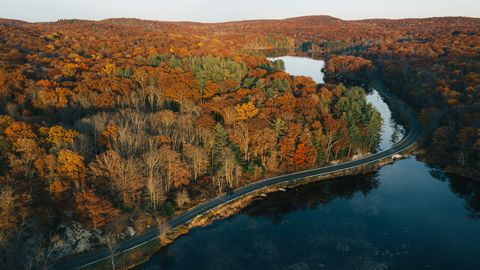 aerial view of autumn leaves in new york