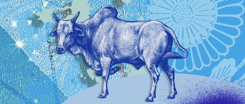 Bovine, Bull, Ox, Cow-goat family, Illustration, Art, Wildlife, Livestock, Drawing, Horn,