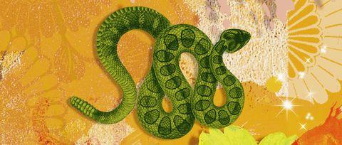 Serpent, Reptile, Snake, Organism, Scaled reptile, Terrestrial animal, Boa, Adaptation, Viper, Python,