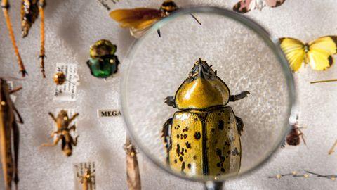 Wat weet jij van insecten?