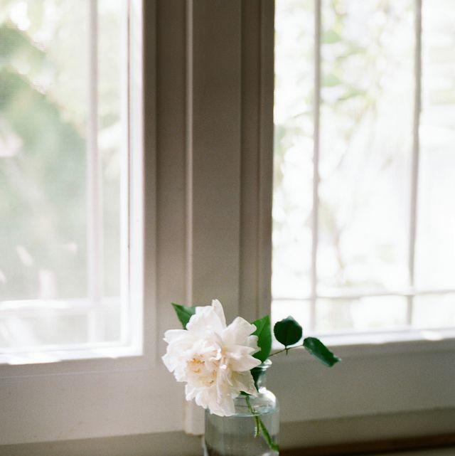 Beautiful fresh cut rose inside water bottle on wooden windowsill at home
