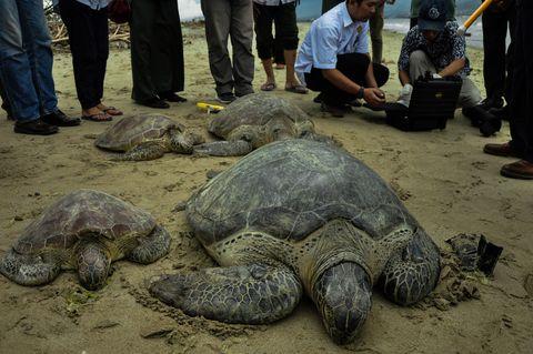 sea turtles in sand