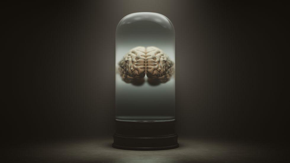 Gli scienziati temono che i cervelli cresciuti in laboratorio inizino a pensare