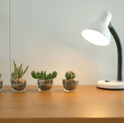 lamp, succulent cactus plant in pot decorating on wooden desk table near white wall
