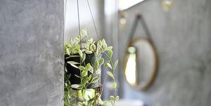 Bang dat je planten direct doodgaan in de badkamer? Deze vier exotische planten overleven in een vochtige omgeving. Wel eens van 'Venushaar' gehoord?
