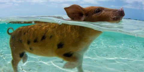 Fluid, Organism, Skin, Vertebrate, Coastal and oceanic landforms, Liquid, Terrestrial animal, Summer, Ocean, Snout,