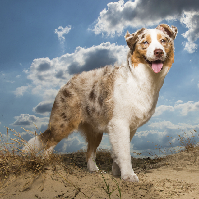 40 Best Medium Sized Dog Breeds List