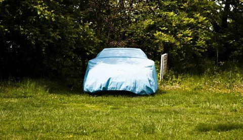 Grass, Green, Natural environment, Tree, Grassland, Vehicle, Plant community, Leaf, Grass family, Automotive design,