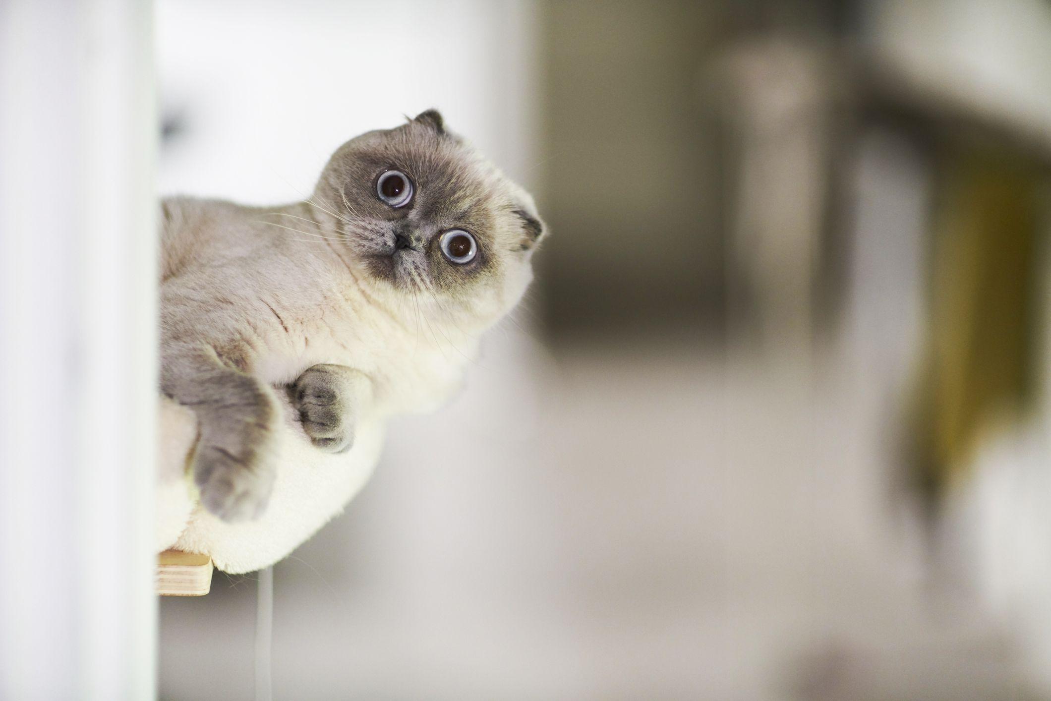 L'esercito americano vuole usare le foto di gattini come armi (più o meno)