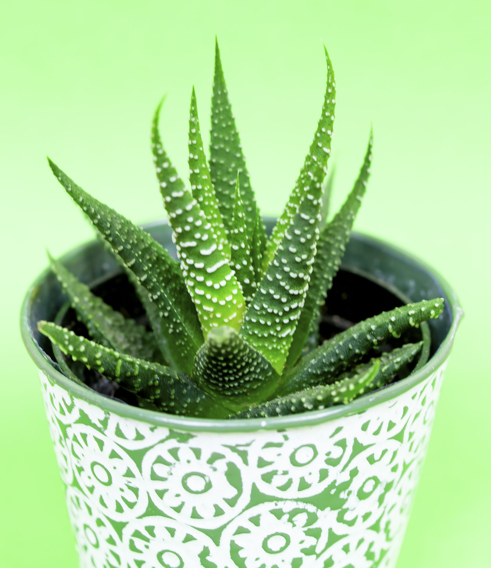 8 Benefits Of Aloe Vera For Skin And Hair Aloe Vera Uses