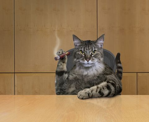 Fat Cat Business Executive CEO