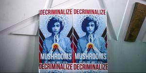 Denver Votes On Nation's First Referendum To Decriminalize Hallucinogenic Mushrooms