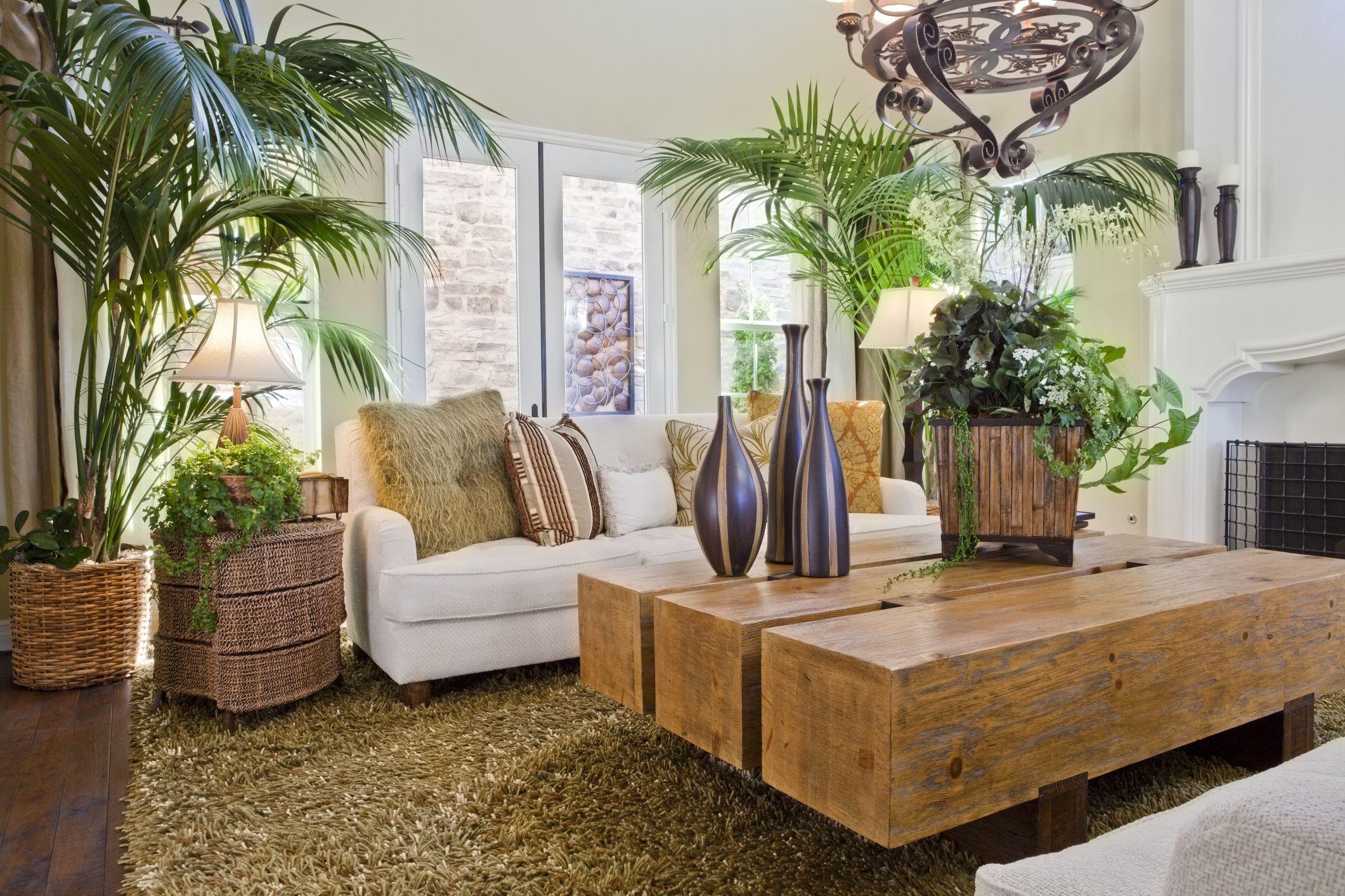 Decora con plantas de interior a partir de ideas DIY de Pinterest