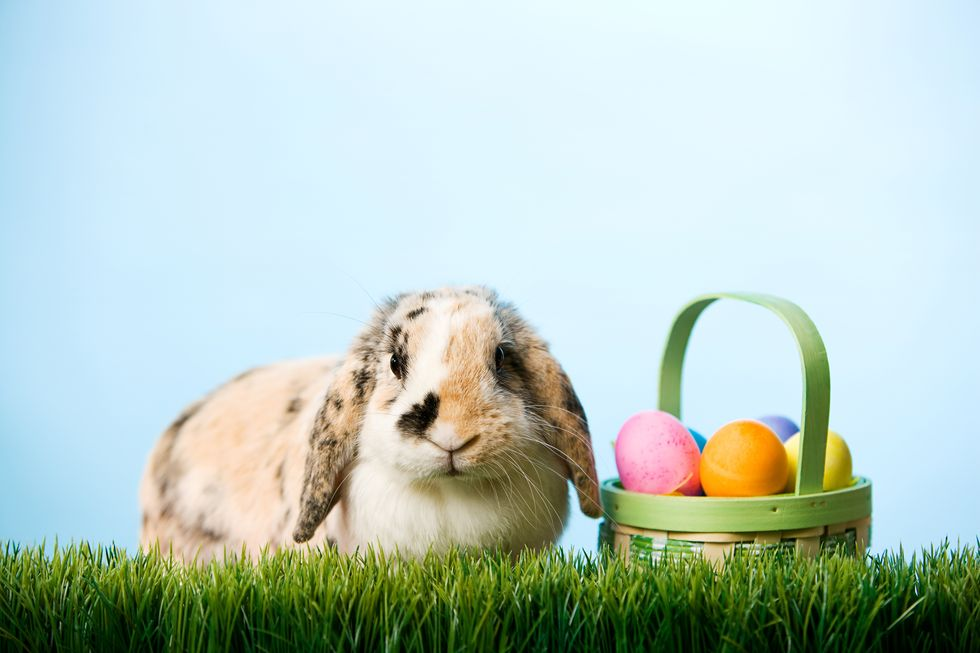 The Fascinating History Behind Your Favorite Easter Traditions