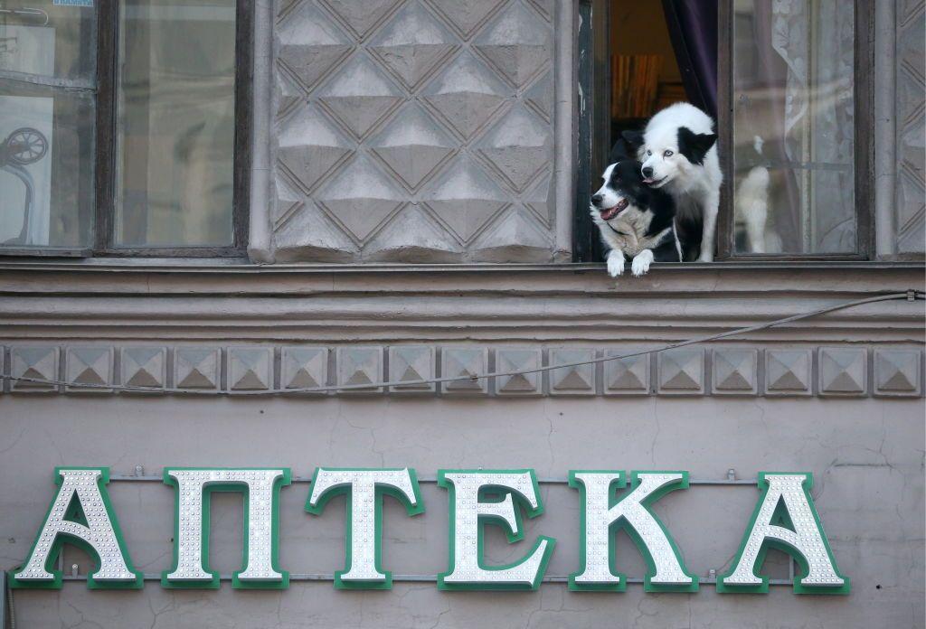 10 cose che forse non sai sui cani