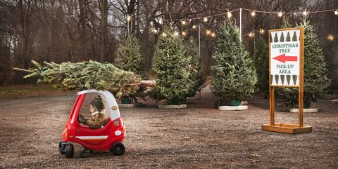 Christmas Trees Near Me.50 Best Christmas Tree Farms In America Christmas Tree