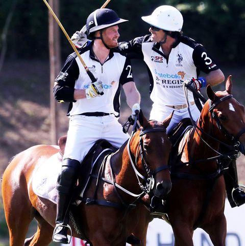Horse, Bridle, Rein, Halter, Animal sports, Horse tack, Stick and Ball Sports, Stick and Ball Games, Polo, Sports,