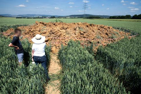 Crop, Field, Grass, Plant, Agriculture, Grass family, Farm, Grassland, Soil, Cash crop,
