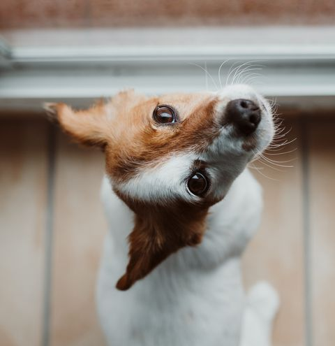 Close-Up Of Dog Looking Away By Window