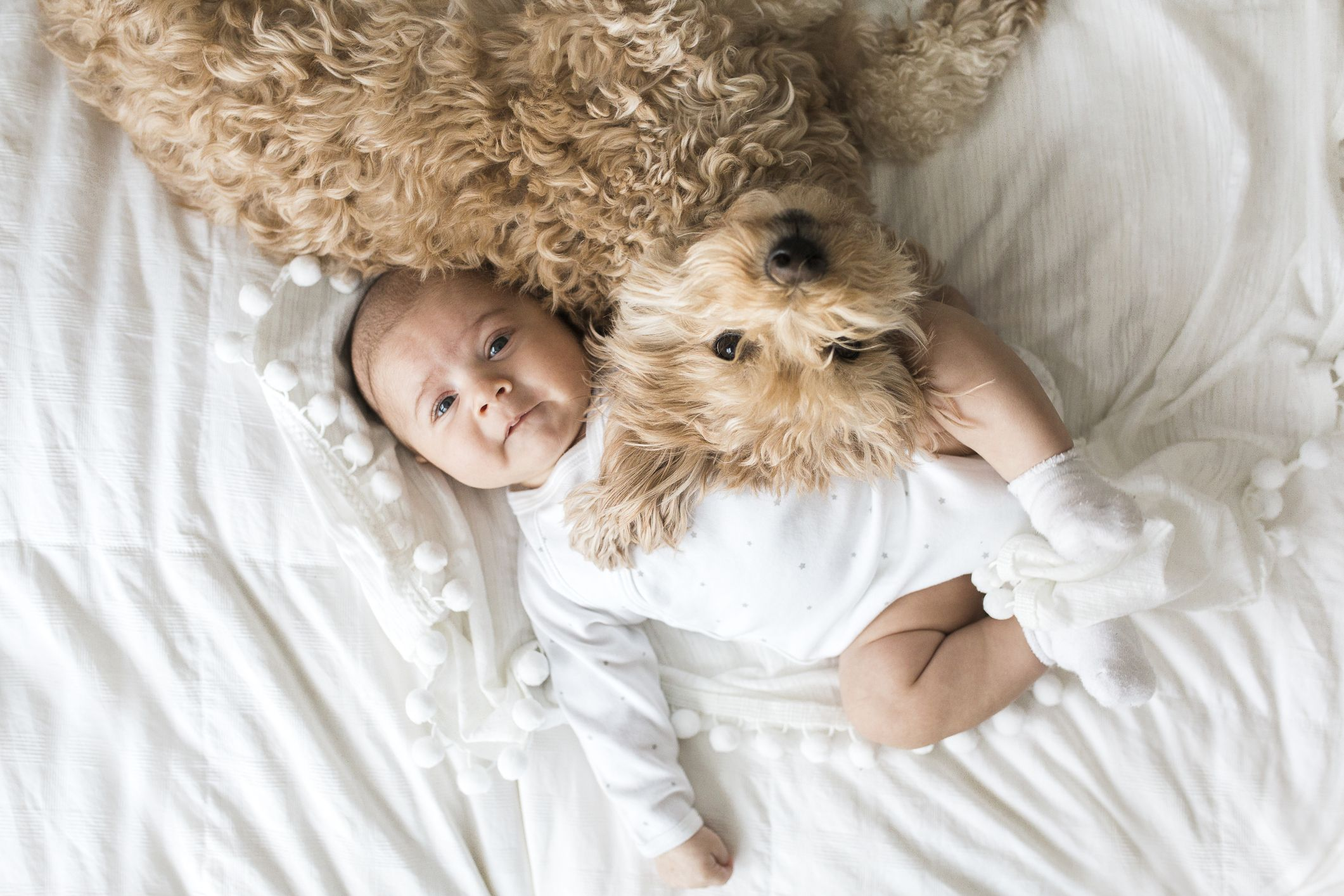 A third of pet owners prefer pets to their children, new study has found