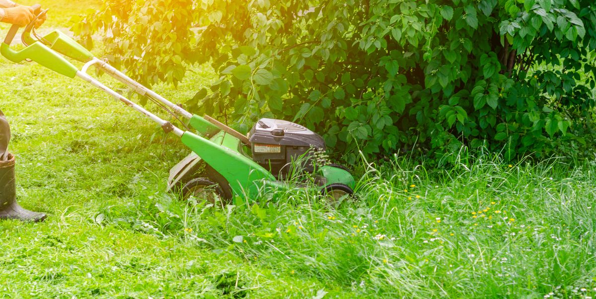 No Mow May: Here's why you shouldn't mow your lawn this month