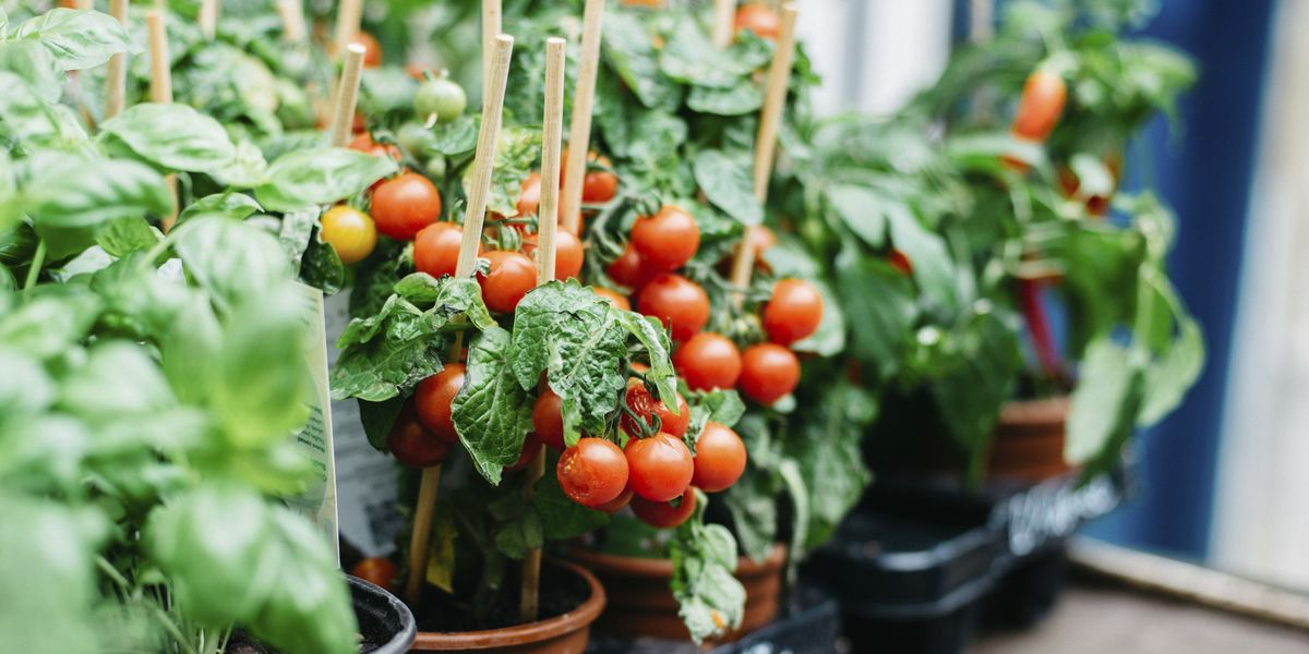 A 5-Step Guide to Growing a Home Vegetable Garden