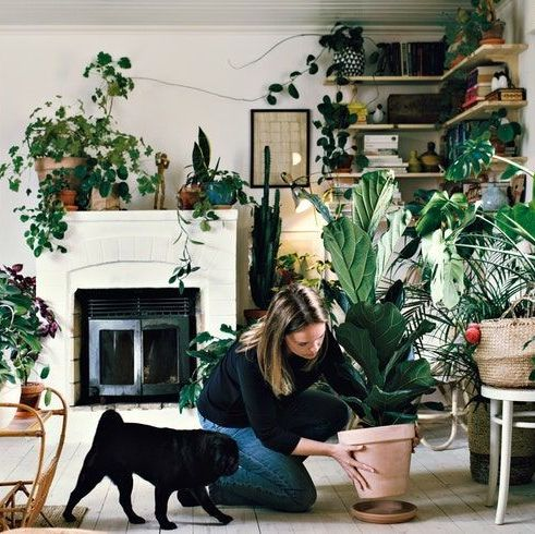 Full length of woman crouching by pug while positioning potted plant on plate in room at home