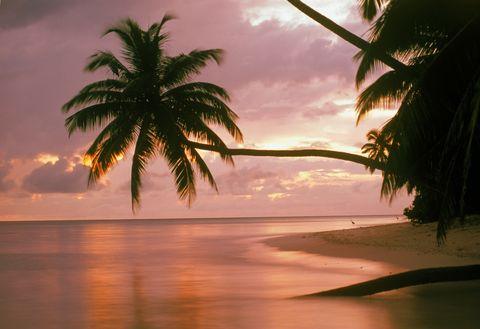 Palm trees dawn reflection Maldives holiday scenic