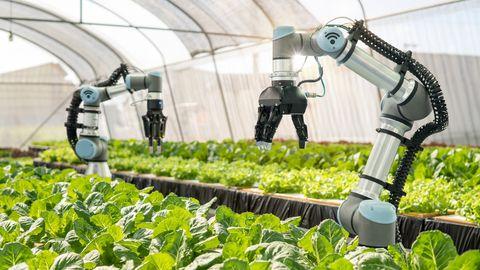 Robots verbouwen groenten