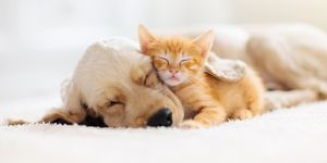 Cat and dog sleeping. Puppy and kitten sleep.