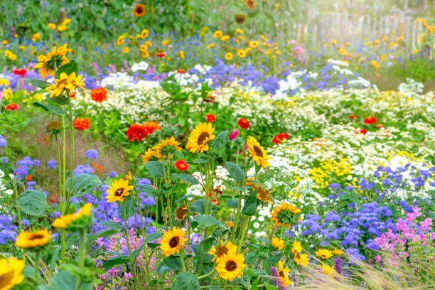 15 Easiest Flowers To Grow Easy, How To Grow A Flower Garden For Beginners