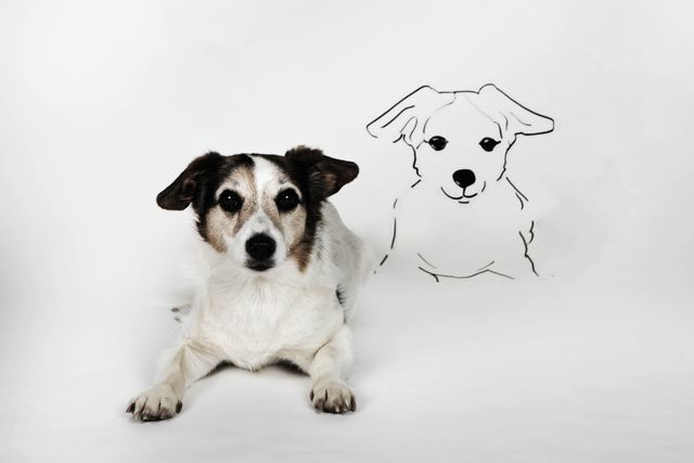 portrait of mongrel with drawn look alike lying on white ground