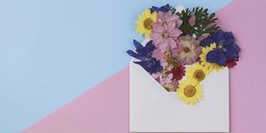 Valentine's day card: Blank envelope with wildflower on pink and blue background. Directly above and copy space
