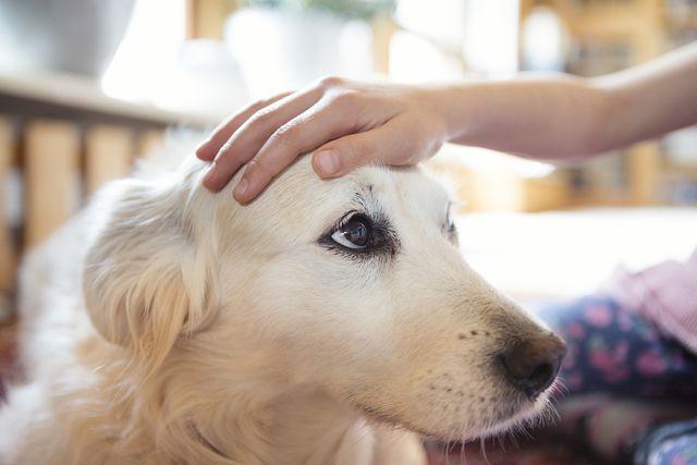 child dog hand on head