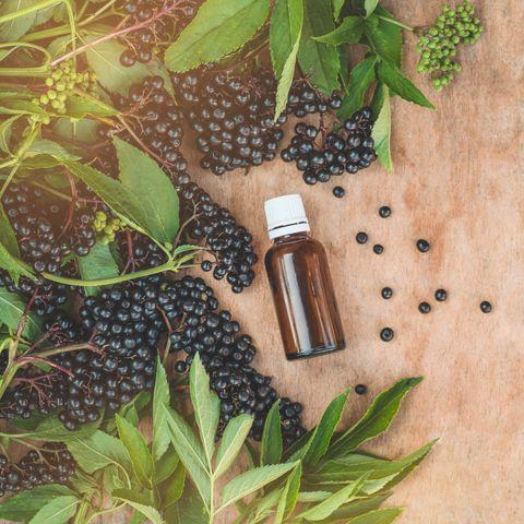 Elderberry syrup immunity boosting for flu season. Elder, black elder.