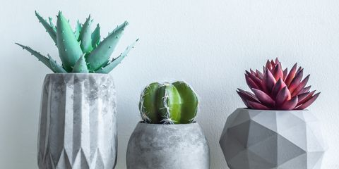 concrete pot minimal style cactus and succulent plant in modern geometric concrete planters on wooden white shelf isolated on white background