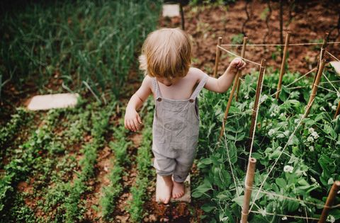 an unrecognizable little boy in the garden