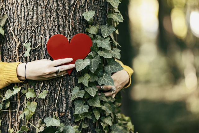woman hand in the woods puts a heart shape on the trunk to tell us that every tree has a heart background of pines forest earth day concept together save the planet from deforestation girl sharing her heart with the tree