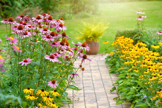 25 Best Perennial Flowers - Ideas for Easy Perennial Flowering Plants