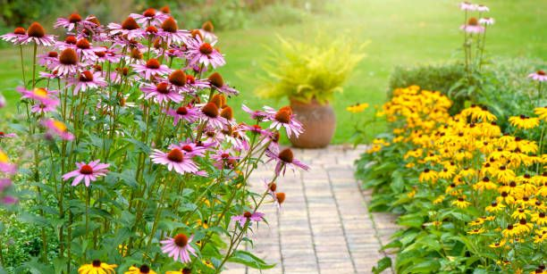 25 Best Perennial Flowers Ideas For Easy Perennial Flowering Plants