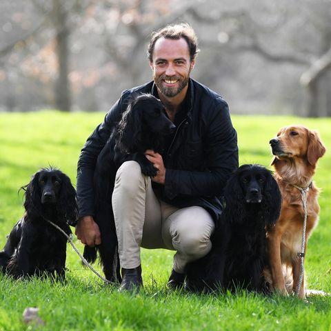 Dog, Mammal, Vertebrate, Canidae, Dog breed, Carnivore, German spaniel, Sporting Group, Companion dog, Field trial,