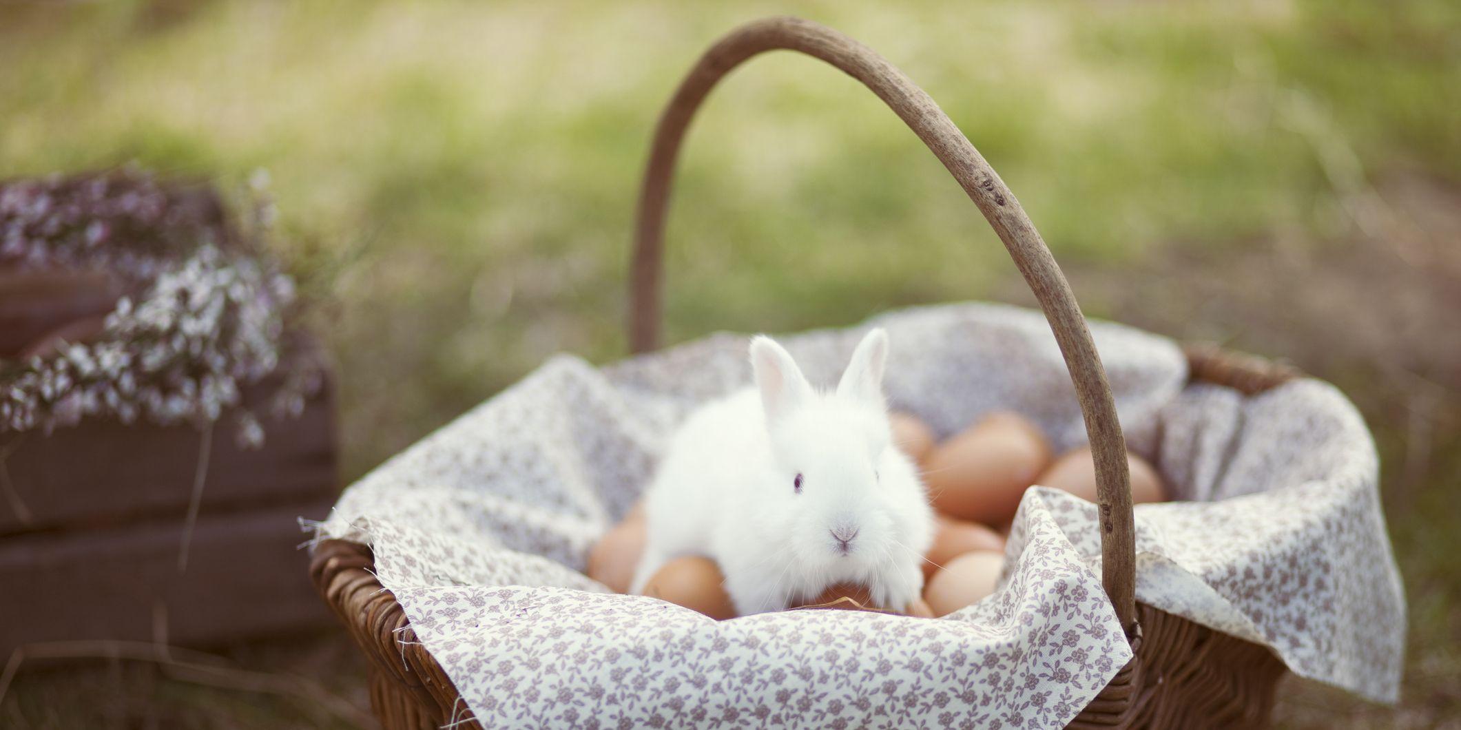 easter bunny, easter bunny origins
