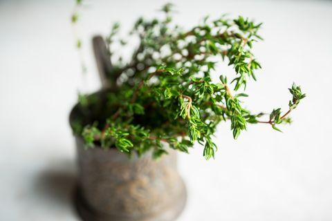 Branches de thym vert frais dans la vieille tasse rustique selective focus faible profondeur de champ