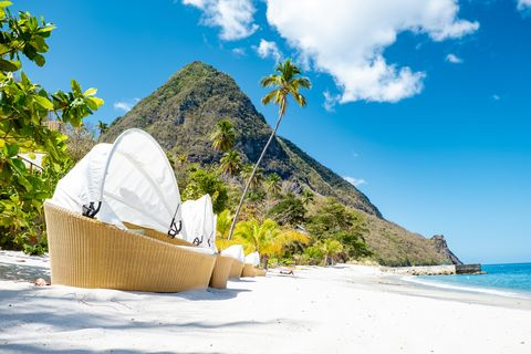 sugar beach saint lucia , a public white tropical beach with palm trees and luxury beach chairs on the beach of the island st lucia caribbean white beach